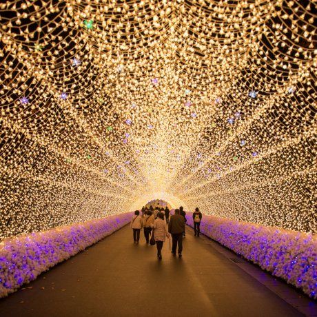 Nabana no Sato Illumination