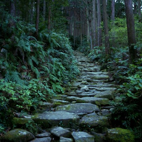 Kumano Kodo Iseji: Binshiyama and the Magose-Toge Pass